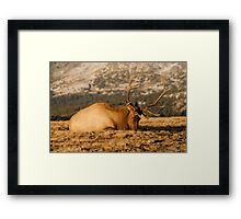 Catching The Evening Rays Framed Print