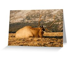 Catching The Evening Rays Greeting Card