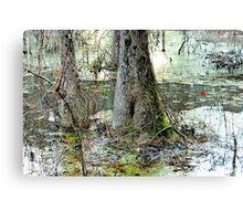 Cypress Butt Canvas Print