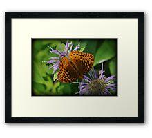 Orange Summer Framed Print
