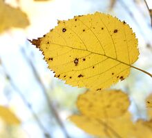 Poplar Leaves II by EelhsaM