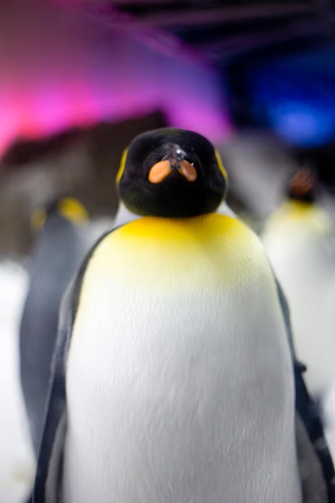 Penguin by codieglann