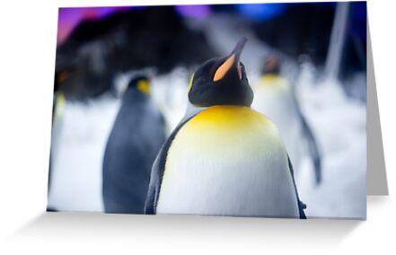 Penguin 2 by codieglann