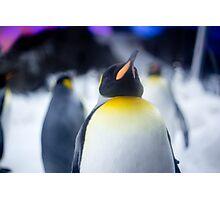 Penguin 2 Photographic Print