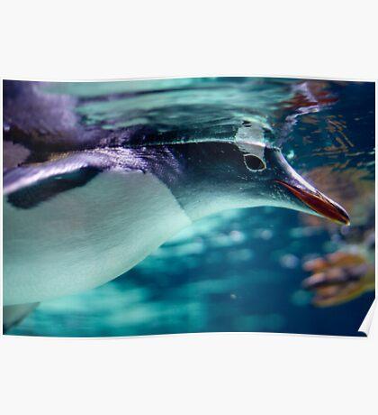 Penguin 3 Poster