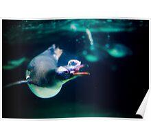 Penguin 4 Poster