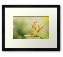 Mellow Yellow Framed Print