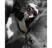 Dogs with game face on .2 Photographic Print