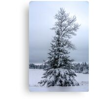 Winter Trees I Canvas Print