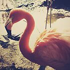 flamingo by natat