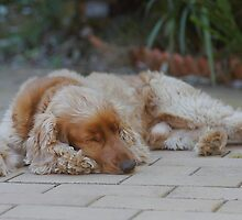 Dog Tired by Mandy  Harvey
