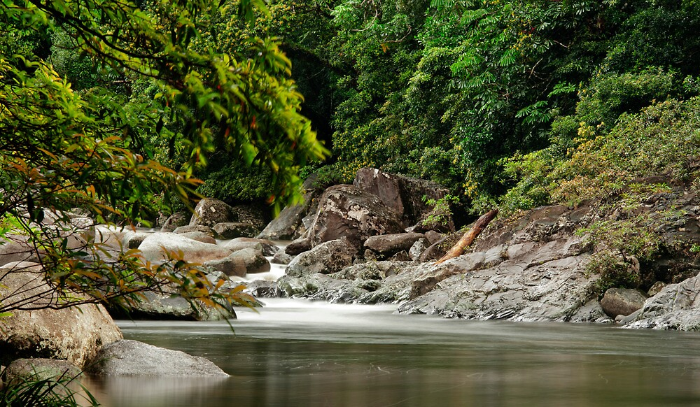 Up The Creek - Mossman Gorge by Jenny Dean