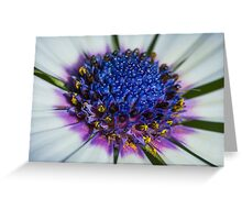 Macro shot of Daisy flower Greeting Card