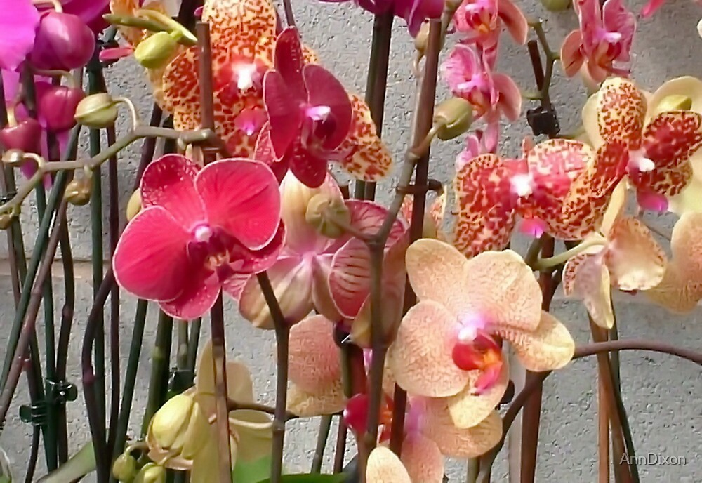 Assorted Orchids by AnnDixon