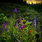 Beauty In The Hills ~ Foxgloves ~ by Charles & Patricia   Harkins ~ Picture Oregon