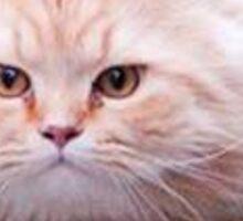 Flying Cat Ball Sticker