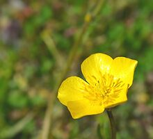 A little flower  by Scott Mitchell