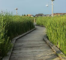 On the Boardwalk by John Velocci