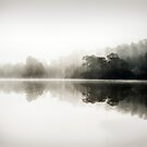 Misty dawn in Glen Affric, Scotland by Justin Foulkes
