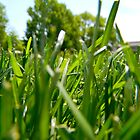 Green Grass and Insect by K. Abraham