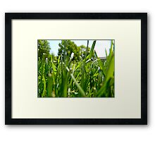 Green Grass and Insect Framed Print