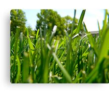 Green Grass and Insect Canvas Print