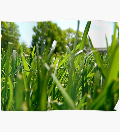 Green Grass and Insect Poster