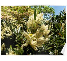 Pale Yellow Flowers Poster