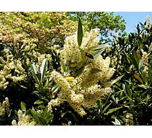 Pale Yellow Flowers Photographic Print