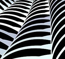 Black and White by Brigitta Frisch