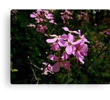 Pink Flowers 2 Canvas Print