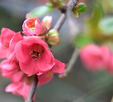 Spring is round the corner by copacic