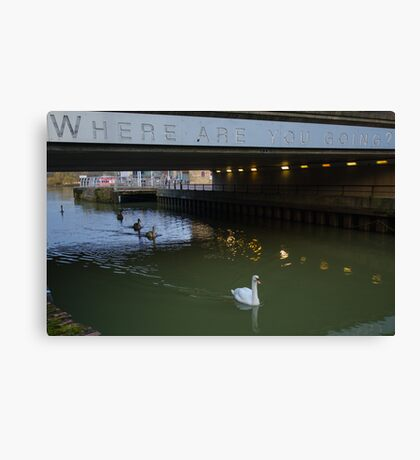 Clever Swans Canvas Print