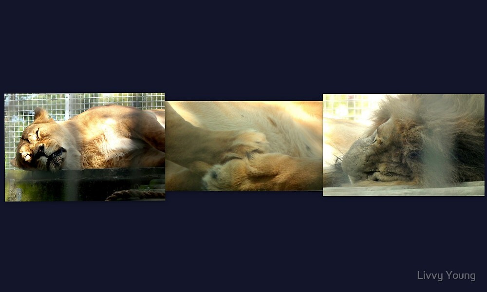 Her,Him,sleeping, holding paws. by Livvy Young