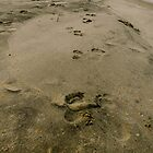 Footprints in the Sand by K. Abraham
