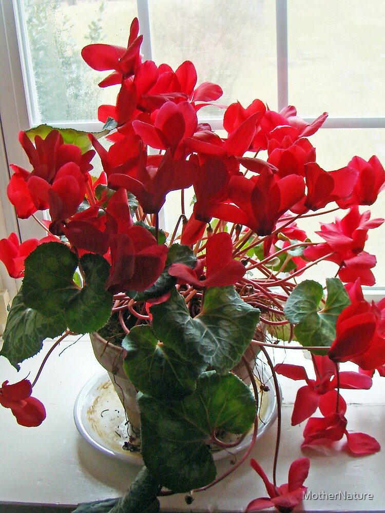 Raging Red Cyclamen Greeting Card by MotherNature