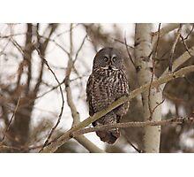 Great Grey Owl - Ottawa, Ontario Photographic Print
