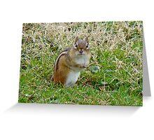 Irresistible Chipmunk Eyes Greeting Card