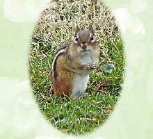 Thinking Of You Greeting Card - Chipmunk by MotherNature