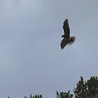 hawk's swift turn by Alex Call