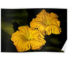 Winter Squash Flowers Poster