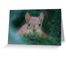 Baby Squirrel in the Fur Tree Greeting Card