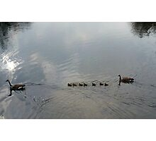 Duck, Duck. . .Gooses?!...err Geese Photographic Print