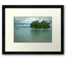 Mangroves Framed Print