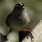 sparrow splitz by Alex Call