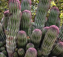 Amazing Cactus by heatherfriedman