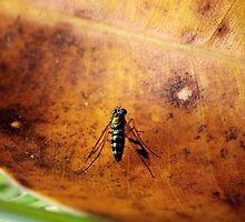 Long-legged Fly by Paul Todd
