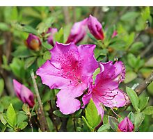 Pretty In Pink Flowers Photographic Print