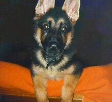 A German Shepherd Puppy named Target by Vivian Eagleson