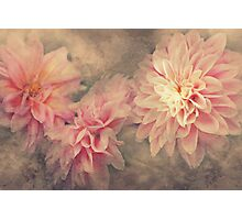 """Autumn Dahlia's"" Photographic Print"